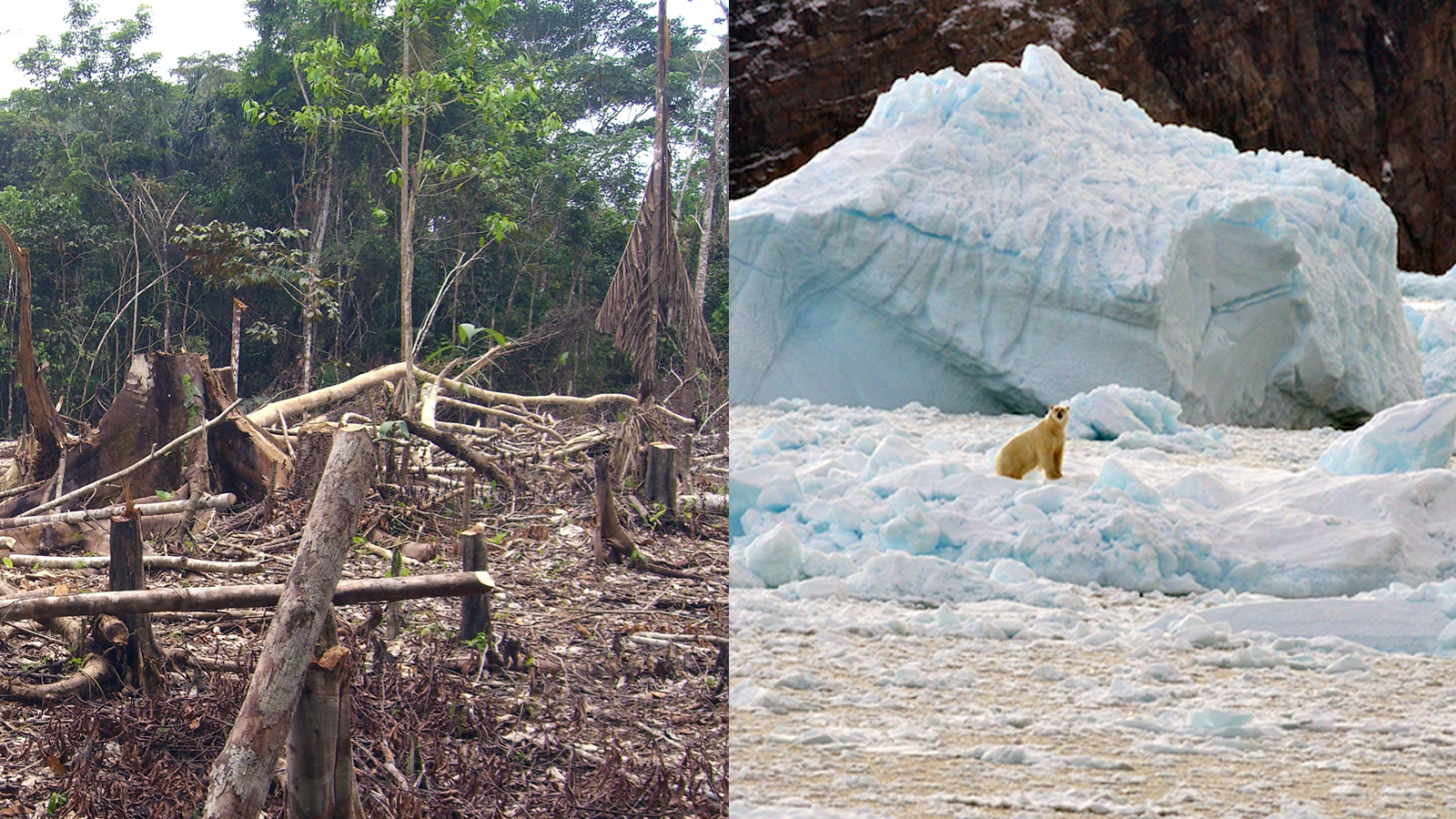 <h4>FORESTS AND GLOBAL WARMING</h4><h5>The Canadian boreal forest, covering more than 1 billion acres, removes enough carbon dioxide each year to offset the emissions of 24 million cars.</h5><em>Matt Zimmerman via Flickr / CC-by-2.0, NASA's Ocean Melting Greenland Mission</em>